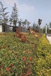 Wunderschöne Hunde super springen jump