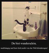 Las mejores fotos, videos y refranes y diariamente hay nuevos y divertidos Facebook …   – Witzig