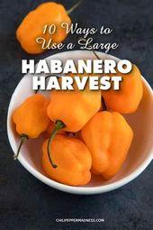10 Möglichkeiten, eine große Habanero-Pfefferernte zu verwenden