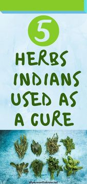 5 HERBS THE INDIANS USED AS A CURE 1