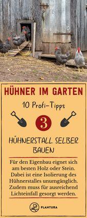 Hühner im Garten: 10 Profi-Tipps zur richtigen Haltung