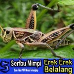 ♚ Hangat Buku mimpi togel 3d belalang