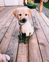 #hound #dog #puppy | dogsofvsco