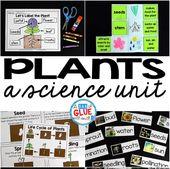 Plants Unit (PowerPoint, Lessons, Printables)