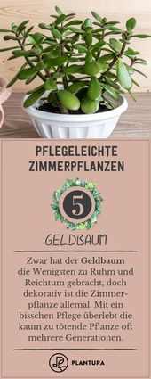 Easy-care indoor plants: Our top 10 for apartment & house   – Plantura Artikel