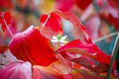 12 Bäume, die brillante Herbstfarben und Bonusfunktionen bieten