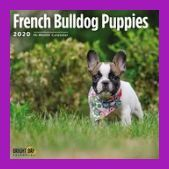 It Is Suggested To Select A Bulldog Puppy From Parents Of A Less Severe Type The Uk Kennel Club Breed Avera