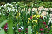 ¿Las margaritas florecen durante todo el año?