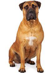 Designer Napfstander Und Futtertheken Fur Grosse Und Kleine Hunde Online Kaufen Kleine Hunde Hunderassen Kleine Hunde Hunde