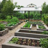 A garden full of raised beds