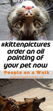 #kittenpictures bestellen Sie jetzt ein Ölgemälde Ihres Haustieres unter www.petsinportrait.com 4