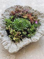 DIY – Beton Pflanzschalen aus Rhabarberblättern für den Garten