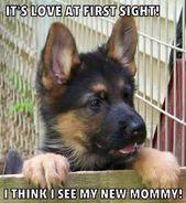 Todo lo que todos amamos de los valientes cachorros de pastor alemán #germanshepherds _…   – Hunde und Wölfe