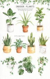 Zimmerpflanzen Aquarell Clipart, Aquarell Blätter, Aquarell Blume, Blatt