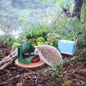 Tiny Hedgehog's Camping Pictures Will Make Your Day!