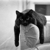 meine Katzen haben das getan: D