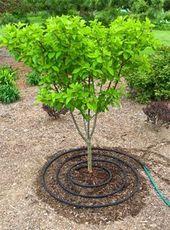 Entretien des arbres – Quand arroser les arbres | Approvisionnement du jardinier   – landscape