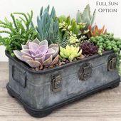 Succulent Arrangement | Rustic Trunk | Succulent Planter | Succulent | Succulent Gift | Gift