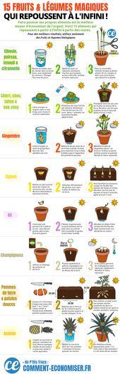 15 Fruits & Légumes Que Vous Pouvez Faire Repousser Chez Vous À L'INFINI !