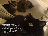 Günün komik hayvan resimleri – kaçık Picdump 5 (60 fotoğraf)
