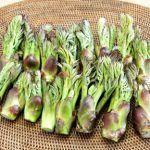 タラの芽の下処理や食べ方 保存方法は 栄養もたっぷりの山菜の王様 山菜 山菜 料理 栄養