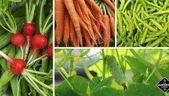 Vegetable garden for beginners: the Gardening Channel Guide – beginners in vegetables …   – Garten