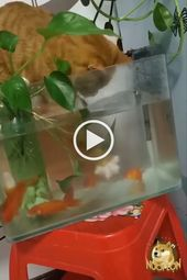 Cats Like To Play With Ornamental Fish In Aquariums Funny 9gag