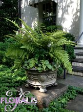 I like this container – break from the norm – nice for a shady space on a patio …