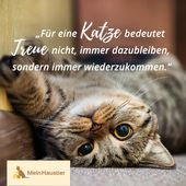 # Kitty Love # Zitat