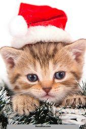 27 Katzen an Weihnachten, zum Ihres Feiertags-Beifalls hinzuzufügen Beifall