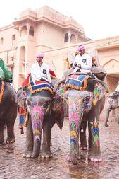 Olifantsritten in de roze stad Jaipur, India,  #India #Jaipur #Olifantsritten #roze #stad – Meine welt