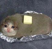 sad cats – Szukaj w Google – plushies