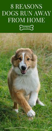 8 Reasons Dogs Run Away From Home Dog Runs Dog Care Training