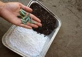 How to Propagate From Succulent Leaf Cuttings