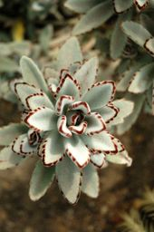 TOPmountain Aloe Seeds 200 pcs Succulent Plant seeds Garden Balcony Plants Seeds Decor