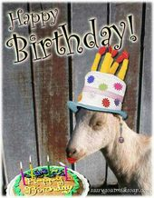 d47f55aaae30ce6d4cab6f7085d57c42 happy birthday goat happy birthday wishes goat birthday birthday cards pinterest goats