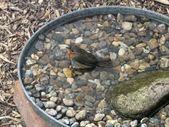 Baño de pájaros de bricolaje para nuestros amigos voladores – #DIY # flying #fly #friends #f …  – Garten