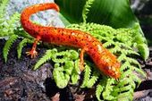 Resultado de imagen para fotos de animales anfibios  – ANFIBIOS