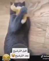 جلنار On Instagram انا الي يقولى رشحى على طول اسويله حركه بعد الترشيح