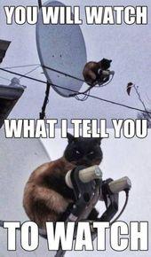 Cat Memes Of The Day 35 Pics – Ep27 #cats #catmemes #memes#lovelyanimalsworld