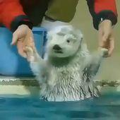 水が冷たすぎるとき私😂🤣  – Süße tiere
