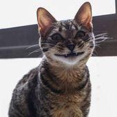 Komik hayvan resimleri Wackyy Picdump günün # 3 – 25 resimler – Wackyy