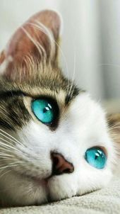 Beautiful Ice Blue Eyes To Fall In Love With Cat Cateye In 2020