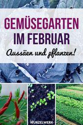 Aussaat & Pflanzen im Februar + Beispiel-Gartenplan