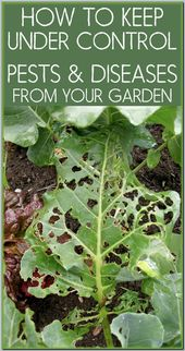 Wie Sie jetzt wissen, ist Bio-Gartenbau nicht so einfach, wie Sie vielleicht gedacht haben – Ch …   – Organic Farming