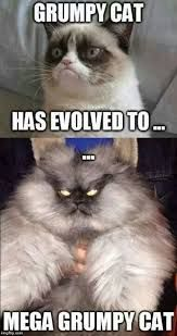 Image Result For Grumpy Cat Funny Pictures Pinterest Grumpy - 8 cat puns that will put a smile on your face