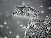 Virus that 'makes humans more stupid' discovered Microorganisms we carry can... 2