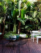All that is required steamy & subtropical grow and garden internet site for your…   – tropical gardens