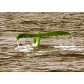 East Urban Home glass picture Animals Whale Tail, photo print in lime green   Wayfair.de