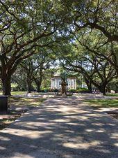 Stately Live Oaks Make For Beautiful Scenery In Audubon Zoo In New Orleans Louisiana Audubon Zoo Live Oaks Scenery